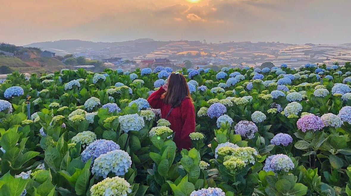 Hydrangeas Flower Garden