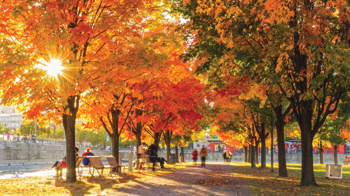 The Mecca of Autumn Foliage - Maple Road