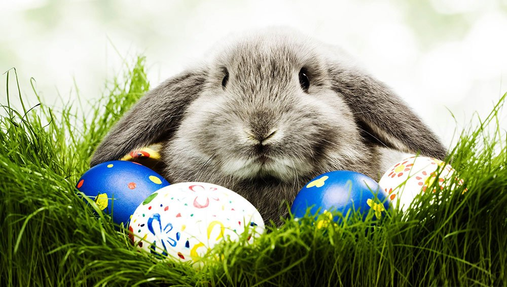 Easter Bunny Fun Facts