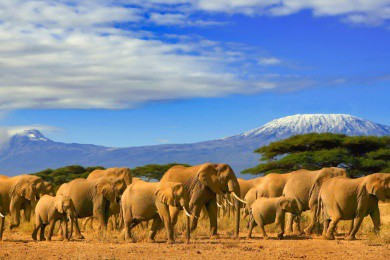 Safaris - Most Common Questions