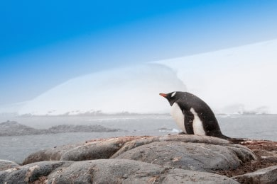 13 Night Quest for the Antarctic Circle