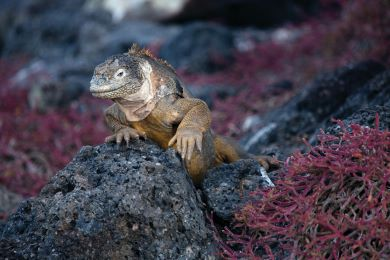 9 Night Galapagos Expedition