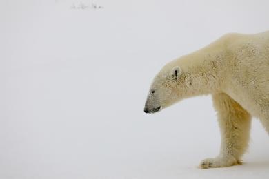 6 Day Manitoba: Polar Bear Adventure