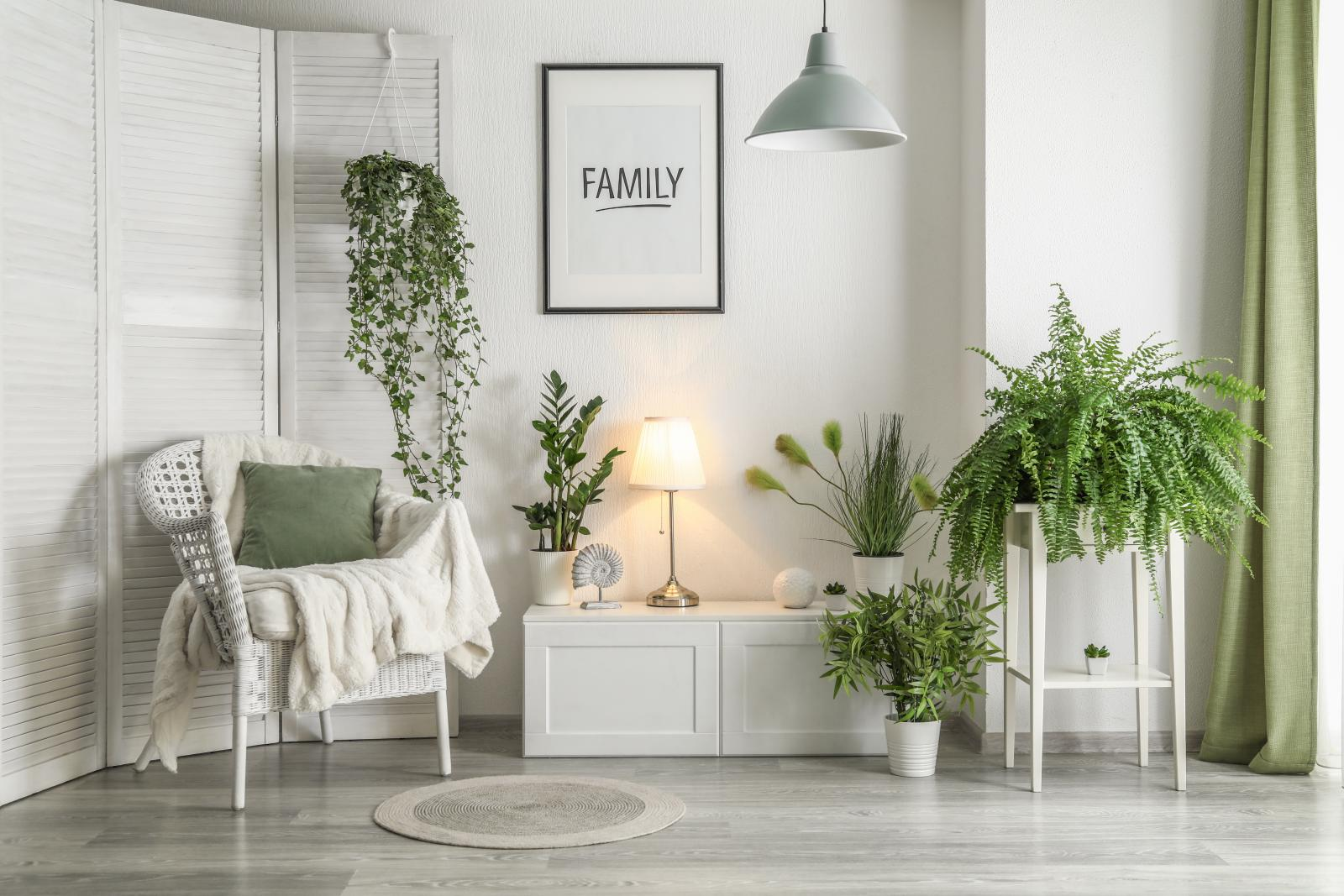 modern room with plants