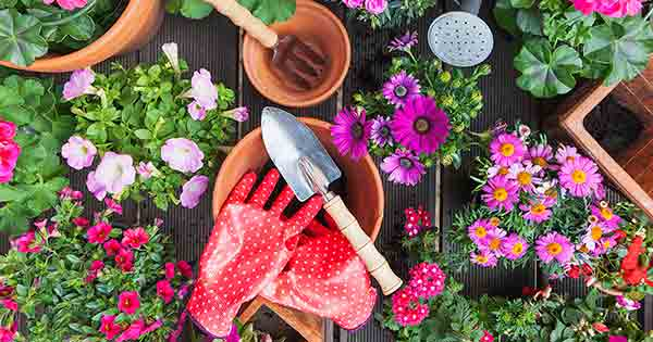 Roses Are Red, Violets Are Blue, I Kept My Sanity During Covid by Gardening, How About you?