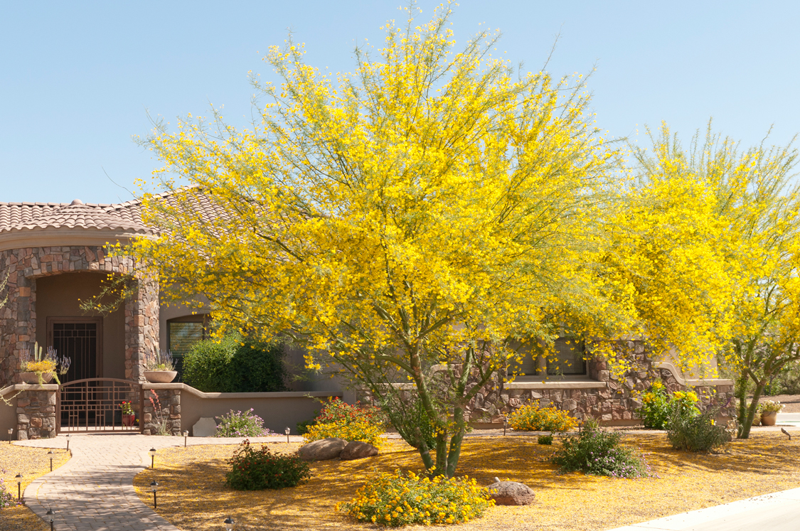The hot, dry summers of Arizona can be a challenge for gardeners in the southwest. However, when you choose drought-tolerant plants, you can enjoy a g