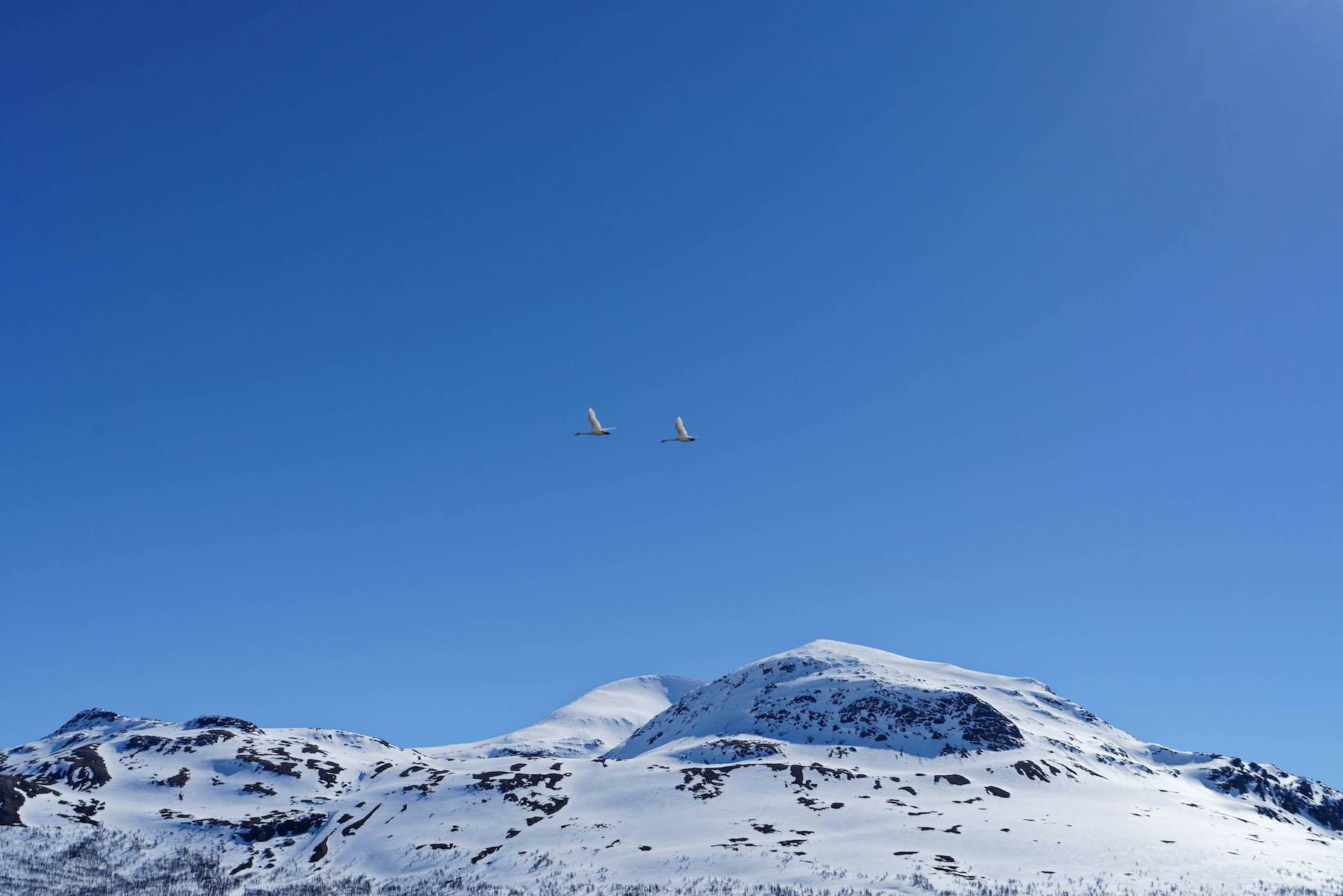 Birds migrating against a blue sky with a mountain top in the background
