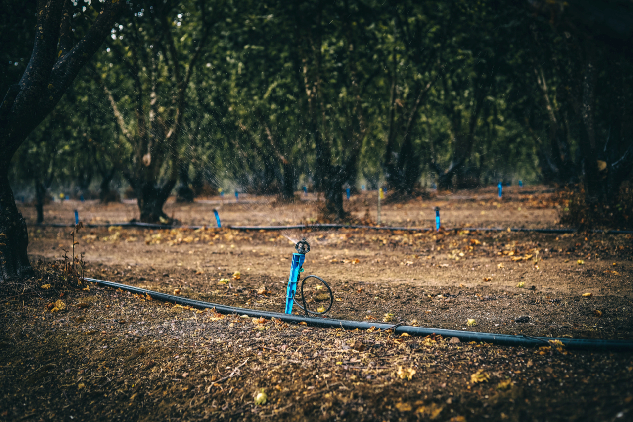 Irrigation at The Truffle & Wine Co, one of the 30 participating local businesses, in Manjimup, WA.