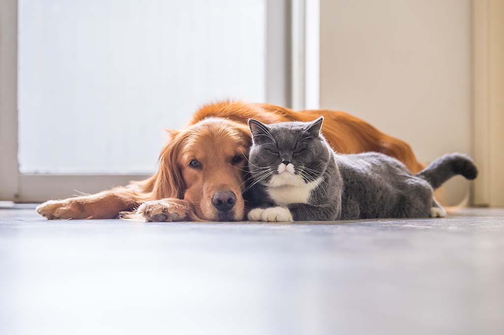 Cómo ahorrar con los gastos de tu mascota | Vivus.es