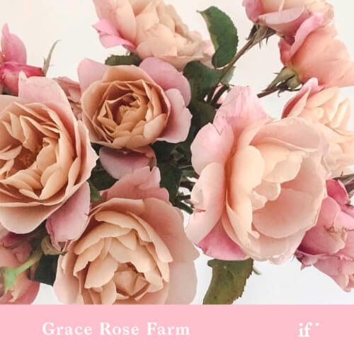 Ordering and Designing with Garden Roses
