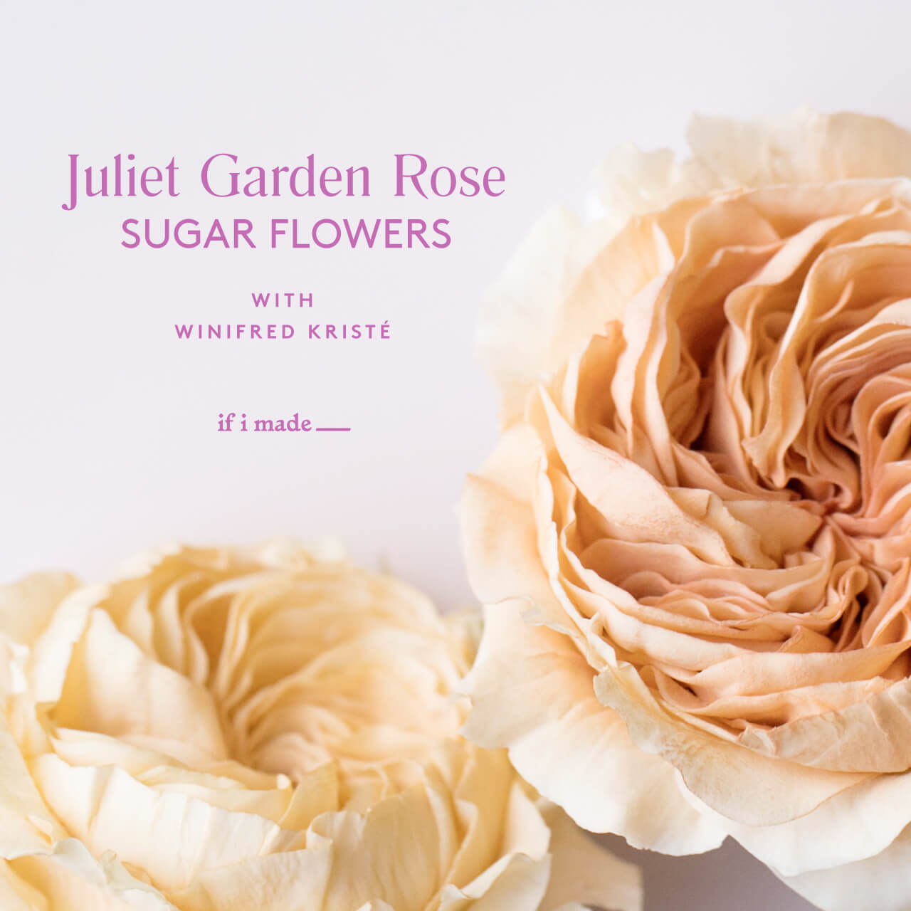 Juliet Garden Rose Sugar Flowers