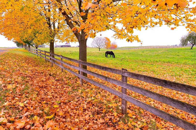 Autumn scene of fencing along a farm