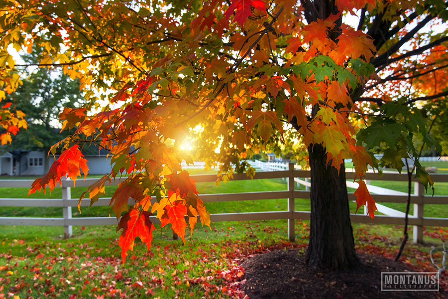 Sunlight showing through colorful leaves in autumn
