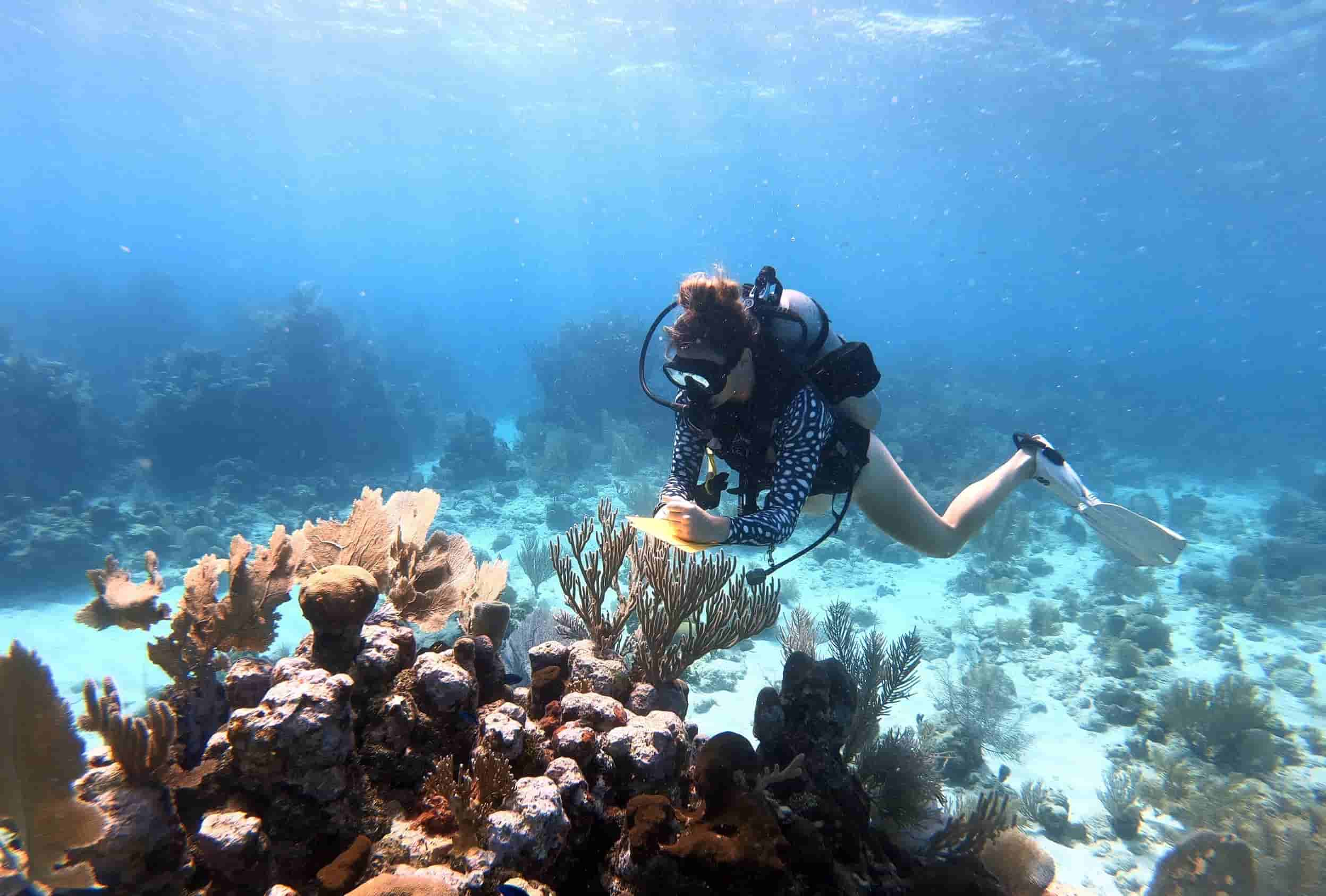 Women in ocean science female scientists marine sciences gender gap scientific careers STEM empowering