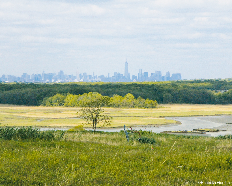 An image of Freshkills Park in Staten Island, NY.