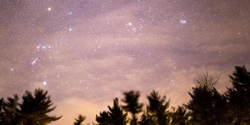 star-gazing-trees.jpg
