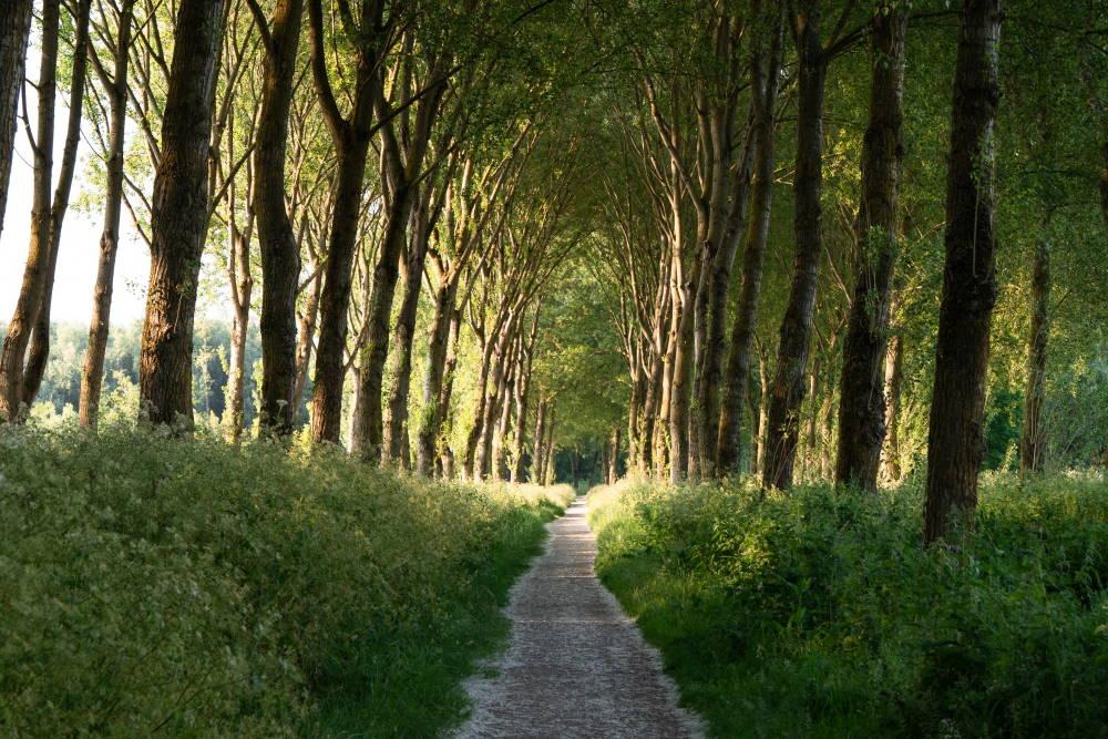 Walking Through the Land of God's