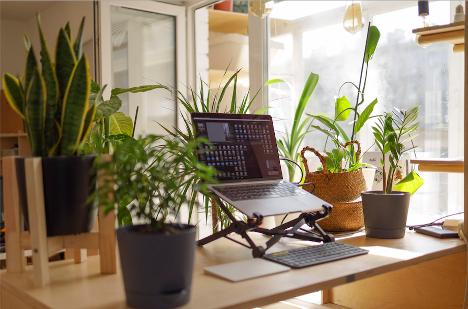 Bureau avec des plantes