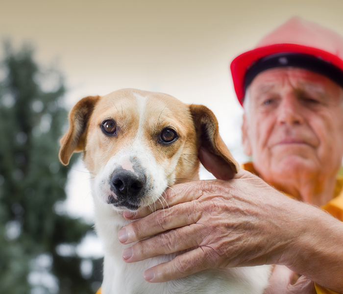 man in hardhat with cute dog