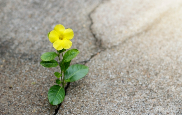 a yellow flower grows out of a crack in concrete
