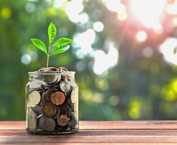 a small plant sprouts from a jar of coins
