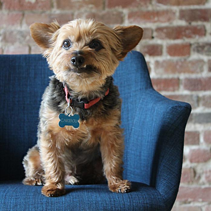 Amino office dog