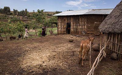 Farmyard at Debre Yakob