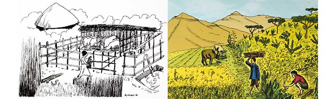 Figure 3 - conceptual graphics for alternative cut-and-carry systems (L) using enclosures or (r) tying the animals (Ethiopian Ministry of Agriculture 2016)
