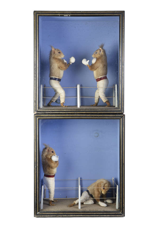 TWO ANTHROPOMORPHIC 'BOXING SQUIRRELS' BY ALFRED SHEALS OF BELFAST