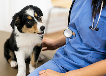 Vet Services - Willetton