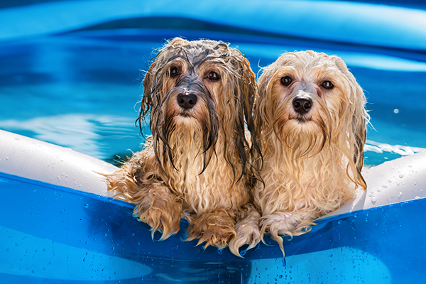 Dogs keeping cool in a paddling pool
