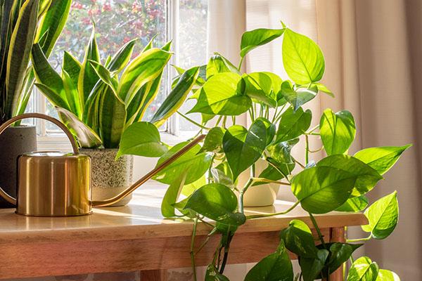 Group of healthy plants near a window
