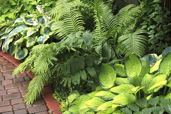 Leafy ferns on a garden path