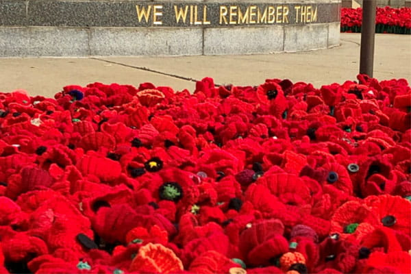 field of knitted red poppies for remembrance day