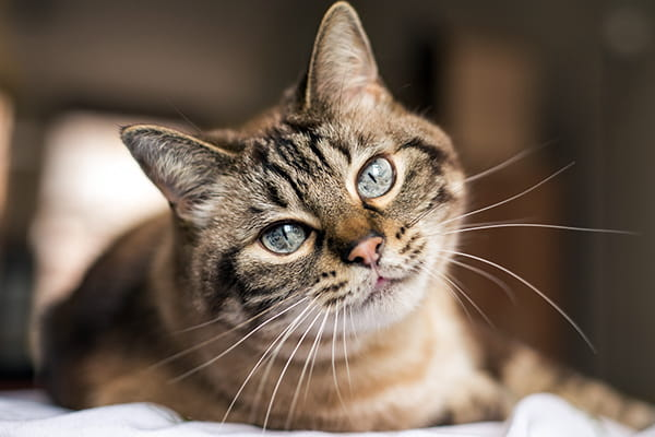 5 tips for a healthy cat