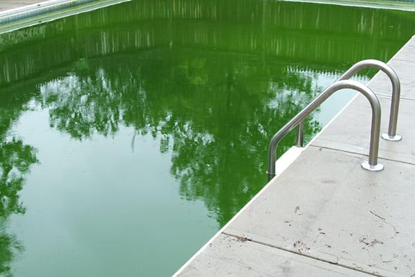 Swiming pool with green water