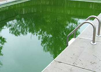 Swiming pool with green water