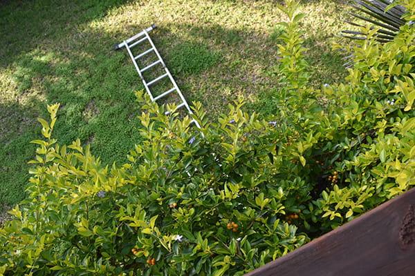 Fallen ladder on a lawn