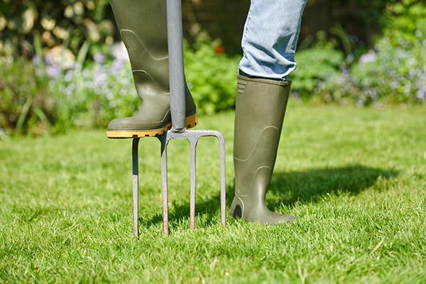 Man aerating lawn with a fork
