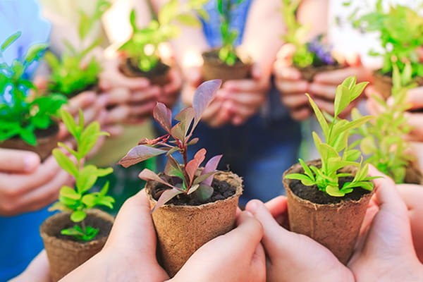 Organise a plant swap in your street