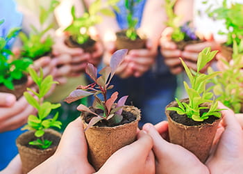 Lots of pairs of hands holding seedlings in pots