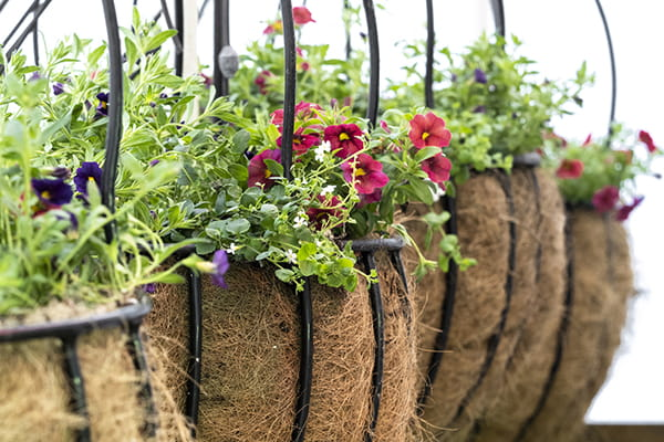 Row of hanging baskets with flowers