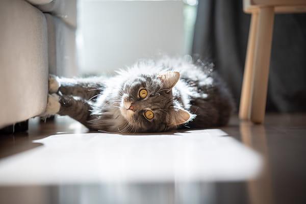 Cat scratching a sofa