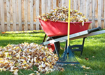Red wheelbarrow filled with leaves