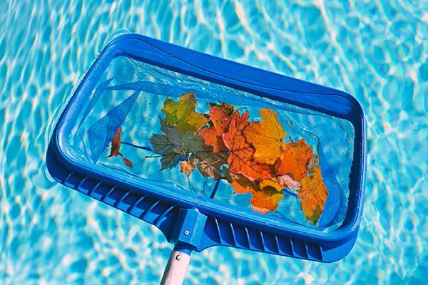 Pool cleaning scoop full of leaves