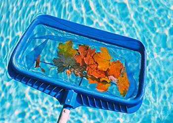 Pool cleaning scoop full of leaves