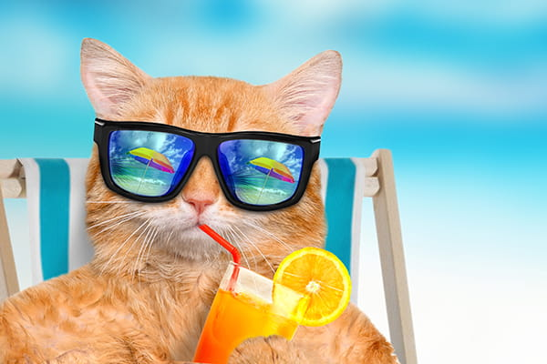 Cat wearing sunglasses sitting in a deckchair
