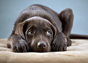 Scared dog on ottoman