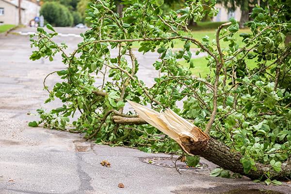 fallen tree branch on road