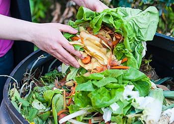 Composting Kitchen Waste